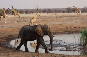 Animals Namibia // by Sonse