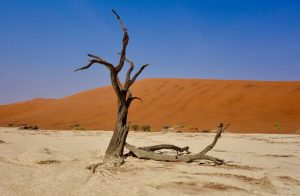 Sossusvlei, Namibia // by Sonse